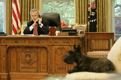 Miss Beazley, The resident White House Scottish Terrier, along with Barney Bush, during George W. One Liner Jokes, Funny One Liners, American First Ladies, 10 Picture, Training Your Puppy, Terrier Dogs, Westies, Pet Dogs, Corgi Dog