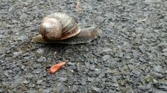 Snail 3
