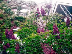purple-green-vines-etsy