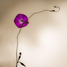 Summer love ... by Nima Moghimi