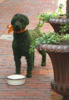 a fun dog topiary - i like the addition of an enamel bowl (inspiration only
