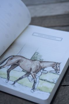 journal - sketchbook - Bay thoroughbred horse - equine art