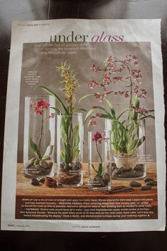 "For a pretty display on my kitchen table, I decided to ""kopy kat"" an idea I saw in the January issue of ""Better Homes and Garde. Orchids In Water, Indoor Orchids, Orchids Garden, Orchid Plants, Indoor Plants, Blue Orchids, Orchid Leaves, Indoor Flowers, Phalaenopsis Orchid"