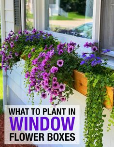 How to get your window flower boxes to look full and last from Spring to Fall. A guide for which plants to plant in your flower boxes, planters and container gardens. #SpringFlowers #WindowBoxes #Garden Window Plants, Window Planter Boxes, Window Box Flowers, Flower Boxes, Rustic Outdoor Decor, Cascading Flowers, Outdoor Flowers, Annual Flowers, Perfect Plants