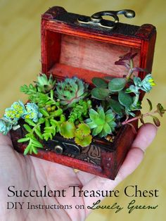 How to use any container to plant up a treasure trove of lush and delicate succulents