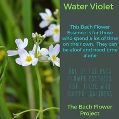 Bach Flower Remedy - WATER VIOLET