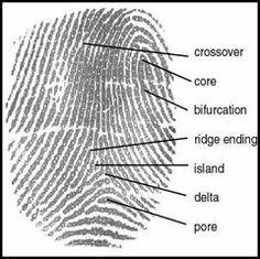 10 Best Fingerprints Identification Images Fingerprint Forensics Forensic Science