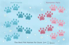 Browse through lists of possible names for pairs of pets. Get inspiration for duos including siblings, romantic pairs, BFFs, and silly combos. Cool Pet Names, Unique Cat Names, Cute Cat Names, Kitten Names, Unique Cats, Unique Animals, Viking Names, Turtle Names, Tortoise As Pets