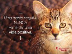 Uma mente negativa nunca vai te dar uma vida positiva. #mente #negativo #vida #positiva