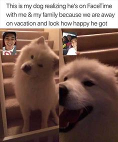 50 Animal Memes That Are Guaranteed to Make You Giggle - Funny Dog Quotes - 50 Animal Memes That Are Guaranteed to Make You Giggle Lovely Animals World The post 50 Animal Memes That Are Guaranteed to Make You Giggle appeared first on Gag Dad. Cute Animal Memes, Animal Jokes, Cute Funny Animals, Funny Animal Pictures, Cute Baby Animals, Funny Cute, Funny Dogs, Cute Pictures, Funny Pictures Hilarious