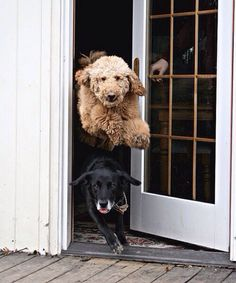 Racing to get outside!