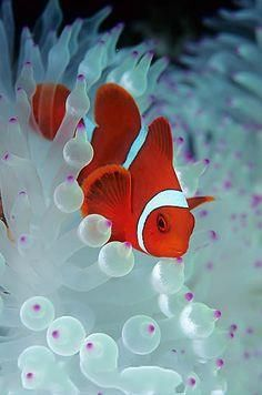 Summary: To start Tropical fish stores can be an exciting prospect. Many tropical and salt water fish lover's dream about how to make it big in this exciting Tropical fish stores business. Underwater Creatures, Underwater Life, Ocean Creatures, Colorful Fish, Tropical Fish, Saltwater Aquarium, Aquarium Fish, Fauna Marina, Beautiful Sea Creatures