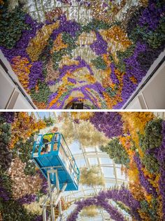 Rebecca Louise Law latest flowery installation is a giant canopy entwining 150,000 flowers native to Australia.