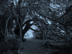 Trees forest monochrome branches (3648x2736, forest, monochrome, branches)  via www.allwallpaper.in