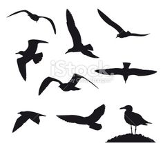 Seagulls on a white background Royalty Free Stock Vector Art Illustration