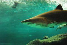 Sei der Guppy im Haifischbecken