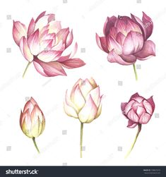 Set with flowers lotus. Hand draw watercolor illustration.