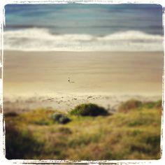 Vintage Beach Photography #beach #vintage #throwback #sea #sun #sand #rjsthisandthat #nature