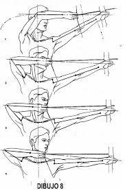 Resultado de imagen para anatomia tiro con arco