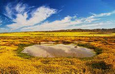 Vernal Pool ~ Carrizo Plain by mikaku, via Flickr
