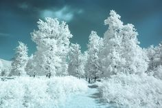 Infrared forest by Costin Mugurel on 500px
