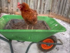 Dust Bath Ideas for Your Chickens – The Owner-Builder Network Diy Chicken Toys, Chicken Treats, Chicken Houses, Dust Bath For Chickens, Raising Backyard Chickens, Keeping Chickens, Pet Chickens, Chicken Roost, Chicken Feed
