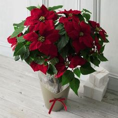 40+ Poinsettia Plant Decor Front Porches