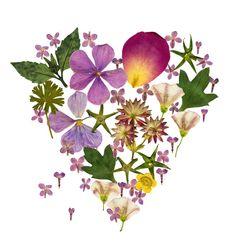 Herbarium Flower Heart Print Note Card by thevysherbarium on Etsy, $3.00