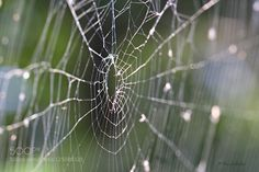 """Tholian Web A flat spiderweb shot at an oblique angle with interesting results. Reminded me somehow of the old Star Trek episode """"Tholian Web"""". Thanks for dropping by and have e a great night!"""