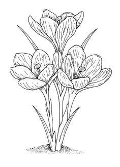 Crocus 2 coloring page - Free Printable Coloring Pages Flower Coloring Pages, Adult Coloring Pages, Coloring Sheets, Coloring Books, Flower Sketches, Drawing Flowers, Printable Crafts, Black And White Drawing, Free Printable Coloring Pages