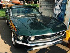 Muscle car #cat #muscle car