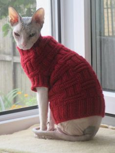 Sphynx Cat Clothes, Pet Clothes, Cute Hairless Cat, Cat Sweaters, Big Hugs, Color Shades, Cat Cat, Comfortable Outfits, Thor