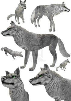 Yes its free I didint make this TEXTURE: Real maker and owner is In return: Credit me or him (if chu will use it, send me a link i will be very t. FeralHeart Fur Texture for Canines Feral Heart, Kangaroo, Moose Art, Lion Sculpture, Fur, Deviantart, Statue, Texture, Anime