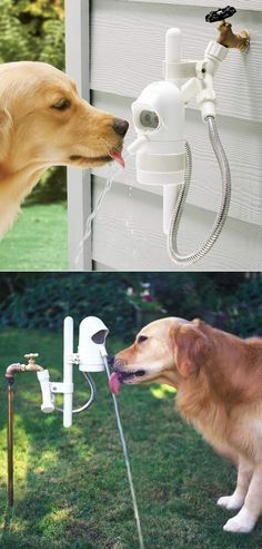 Your dog will always have fresh clean water; WaterDog will ensure your dog can always help itself to fresh clean and healthy water whenever it likes;  Sonar proximity sensor automatically turns the water on when your dog is within 3' and off again when your dog walks away; Never worry again about stagnant, unhealthy or empty water bowls; Installs easily on any outdoor faucet. Cool!