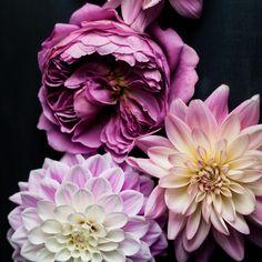 flowers, dark, macro