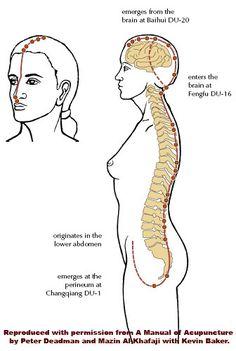 Acupuncture.com.au - Education - The Du (Governing Vessel) Channel