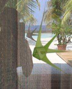 Kurumba palm fish Maldives, Palm, Leaves, Fish, Instagram Posts, Plants, The Maldives, Plant, Hand Prints