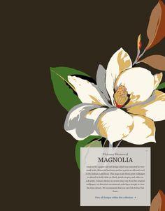 Love this Vivienne Westwood Magnolia wallpaper / fab