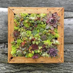 Succulent Vertical Living Wall Art Kit 12 inch Buy by sosucculent, $65.00