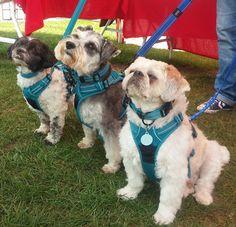 Reflective Dog Collars, Show Us, Dog Show, Dog Harness, Pop, Website, Link, Google, Animals
