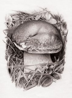 Pencil Drawings of Mushrooms | Mushroom (Pencil Draw) by MarcoFaccio