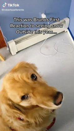Super Cute Puppies, Cute Baby Dogs, Cute Funny Dogs, Super Cute Animals, Cute Dogs And Puppies, Cute Little Animals, Cute Funny Animals, Doggies, Animal Jokes