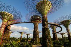 Afbeeldingsresultaat voor singapore garden in the sky Singapore Garden, Sands Singapore, Plan My Trip, Gardens By The Bay, Marina Bay Sands, Sky, Park, Building, Places
