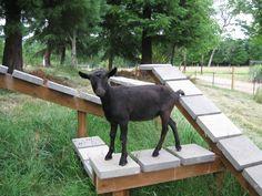 Great idea, cinder blocks to help keep their hooves trim :)