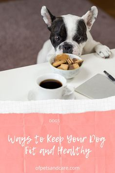 You are supposed to pay attention to what you are feeding your dog, there's such a thing as dog obesity too. Here are Ways to Keep Your Dog Fit and Healthy. Daily Nutritional Needs, Eating Schedule, Dog Diet, Healthy Pets, Regular Exercise, Types Of Food, Big Dogs, Pay Attention, Healthy Weight