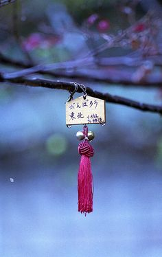 """Ema 絵馬 are small wooden plaques on which Shinto worshippers write their prayers or wishes. The ema are then left hanging up at the shrine, where the kami (spirits or gods) receive them. This particular one says, """"Gambaro Tohoku (from 311)."""""""