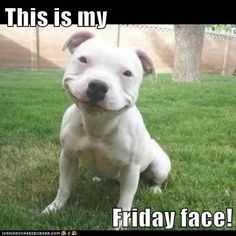 Cute dog wishing you some Friday love :) #happyfriday #cute #dog #woof !