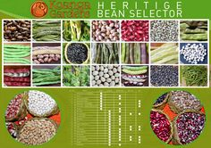Bean-Chart-final.jpg (4500×3182)