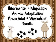 This hibernation & migration PowerPoint and worksheet bundle allows students to classify various animals regarding how they adapt to seasonal change. It includes a 63 slide PowerPoint lesson, accompanying workheet, and more.