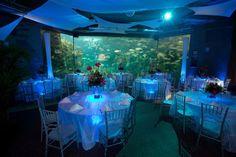 The Florida Aquarium Wedding Ceremony Reception Venue
